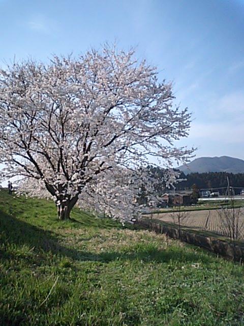 MA320362.jpg